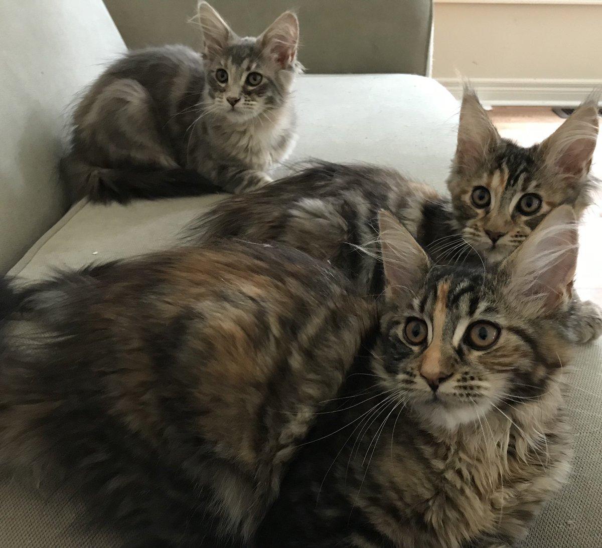 kittensforsale hashtag on Twitter