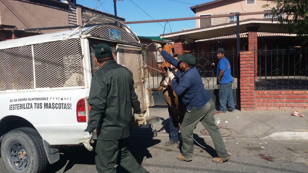 Resultado de imagen para pitbull ataca adulto mayor en Hacienda del Bosque en Mexicali,Baja California