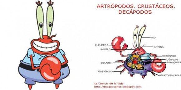 Carlos Lobato On Twitter Larry La Langosta Es Otro Representante Del Grupo De Los Crustaceos Como El Sr Cangrejo