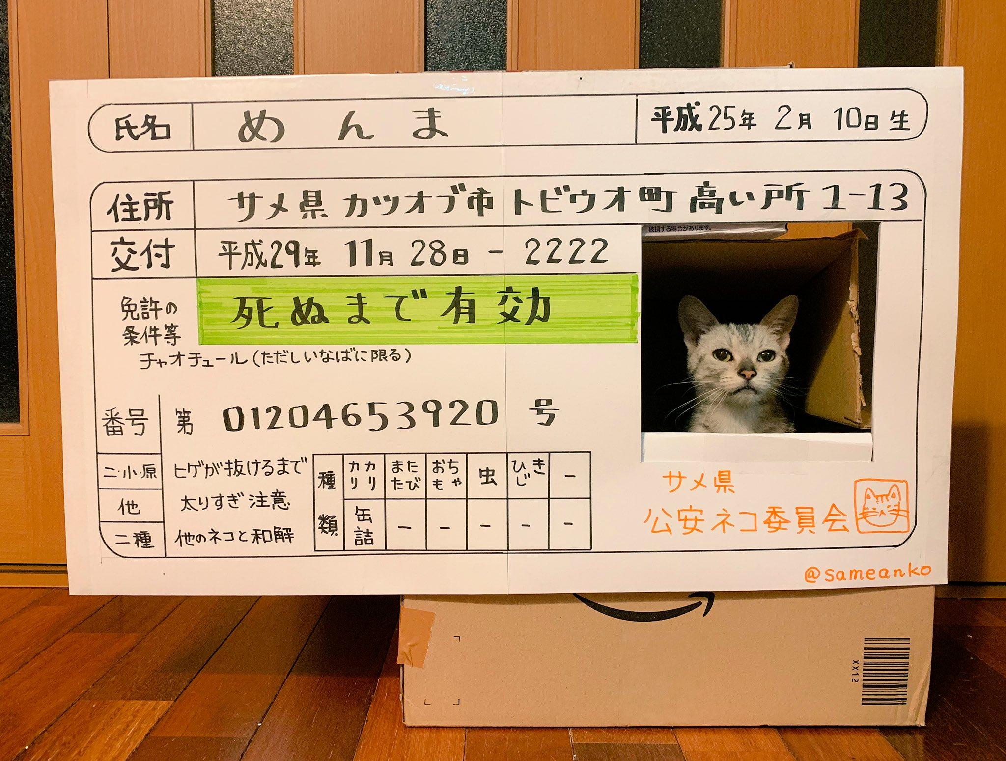 猫がいつもダンボールから顔出してるので免許証にしてやりました。