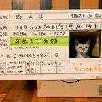 これはリアルなめ猫ダンボールから顔を出してるので免許証にしちゃった!