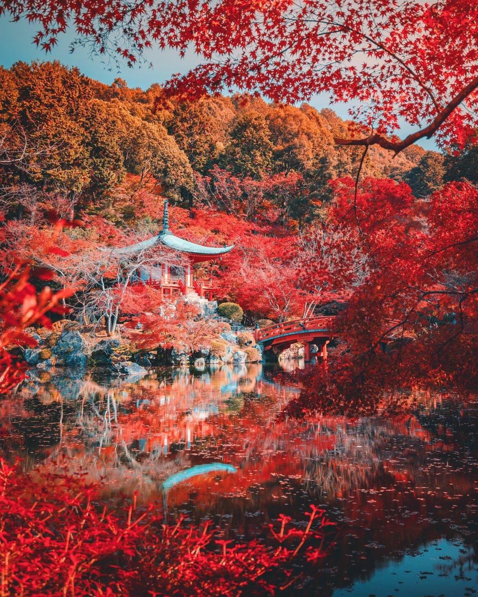 滞在20時間の弾丸ツアーで、京都&奈良を撮りに行った成果を見てください??