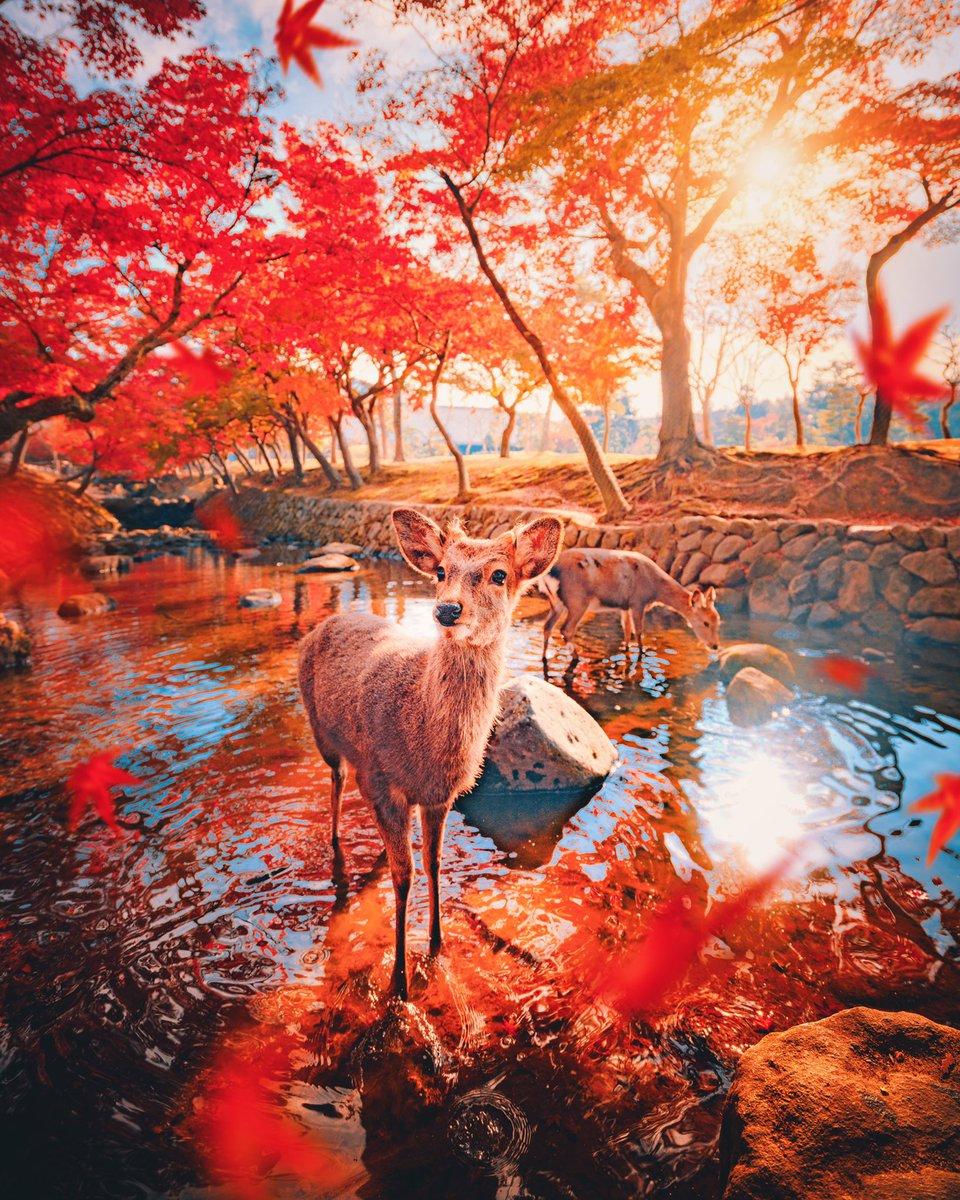 日本に生まれて良かった…!!2つの古都の真っ赤な秋!!