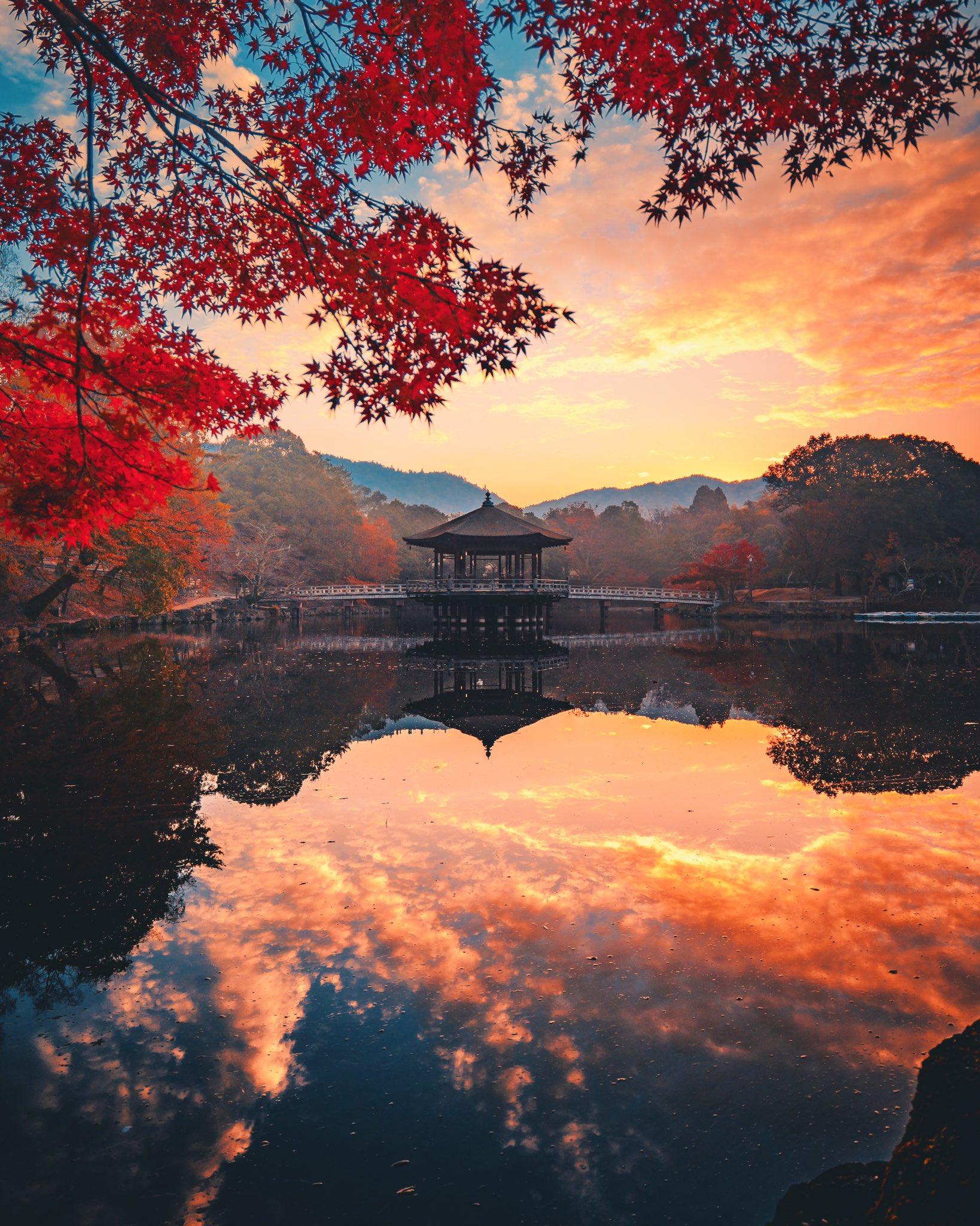 滞在20時間の弾丸ツアーで、京都&奈良を撮りに行った成果を見てください🍁📸