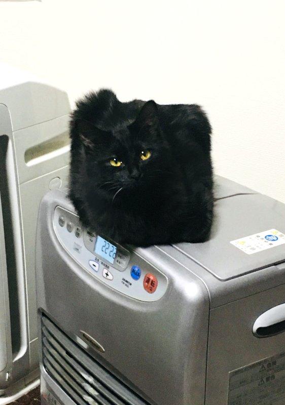 家に見慣れないものがある…と思ったら可愛い猫じゃないかww