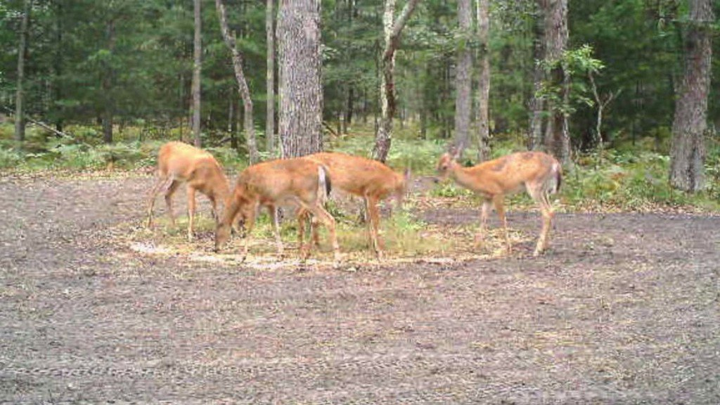 CWD Suspected In Gratiot Eaton County Deer DNR Says T