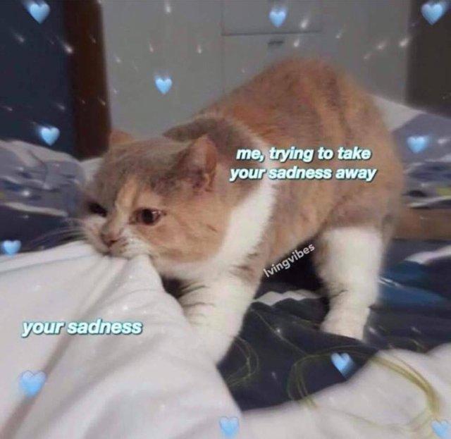 Wholesomememes On Twitter