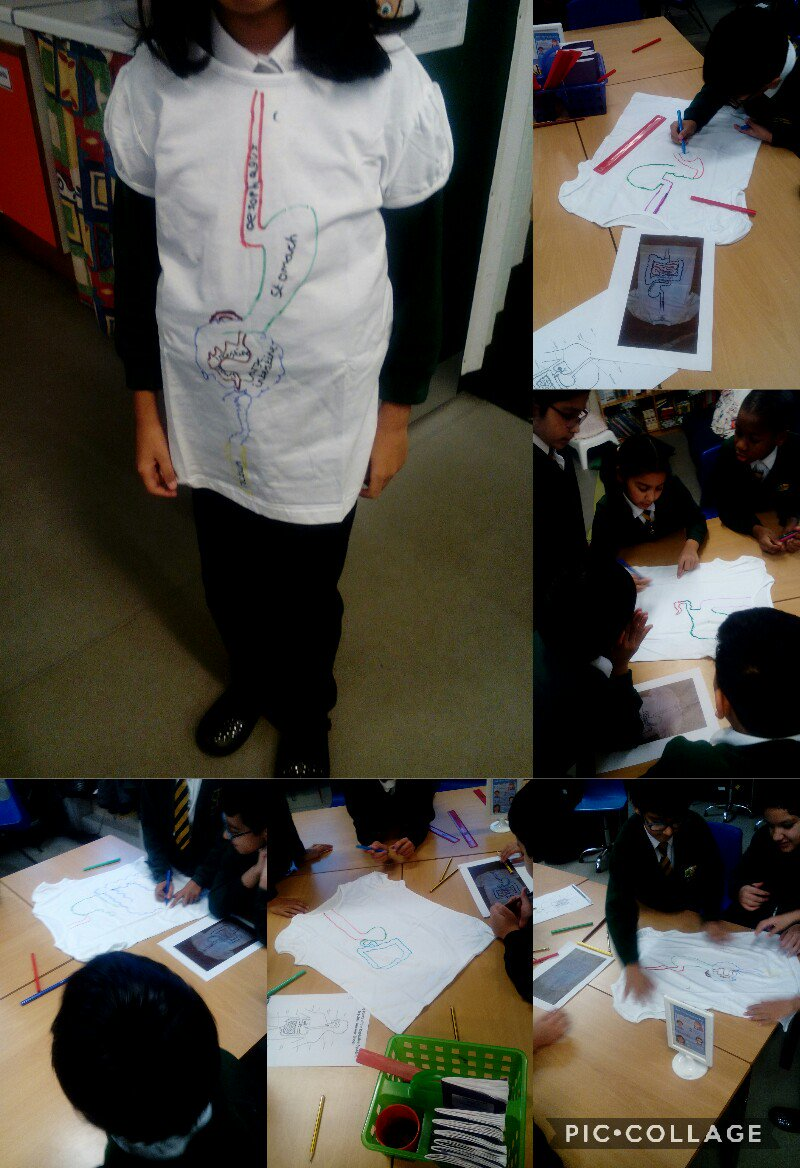 RT @Brimrod_Primary: Year 4 created wearable digestive systems! Fantastic team work!👕 https://t.co/2klEEczakx