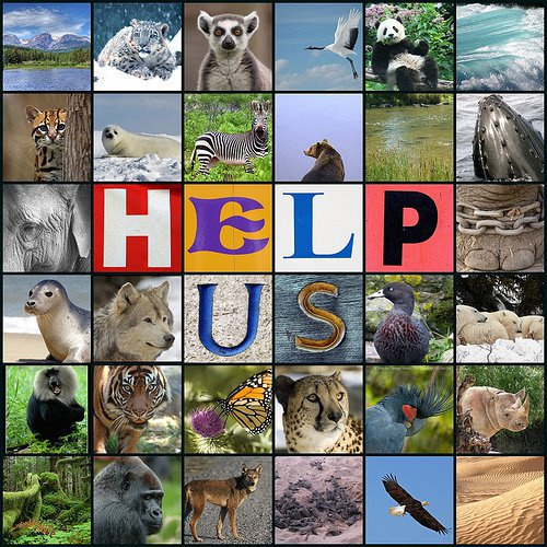 When The ground No longer dances To the rhythm Of our tread When Our song of life No longer Fills the air When By mans hand We are pushed Into #extinction Will The absence Of our music Bring despair © #EndangeredSpecies #WWF #EndWildlifeCrime #SaveAnimals