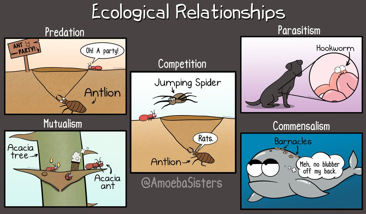Amoeba Sisters On Twitter A Few Ecological Relationships What