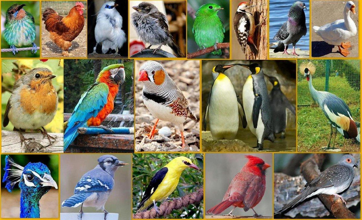 Покажите картинки всех птиц с названием