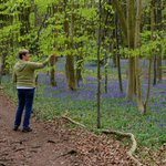 Walk this way on Saturday, but don't expect bluebells.