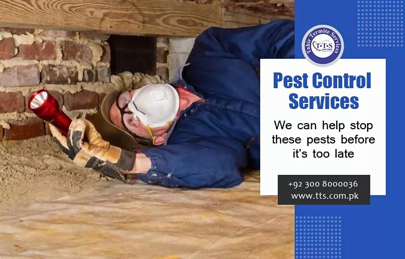 Tahir Termite Services On Twitter We Offer Effective Termite And Pest Control Services In Lahore We Will Clean Your Home And Commercial Buildings From Termites Instantly Call 03008000036 03218000036 Email Tts Hs Yahoo Com Web