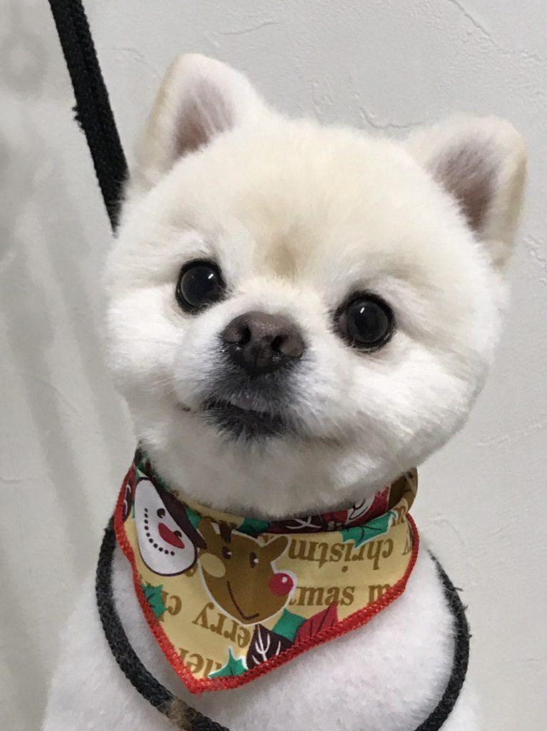 a wandogfood awan dogfood twitter