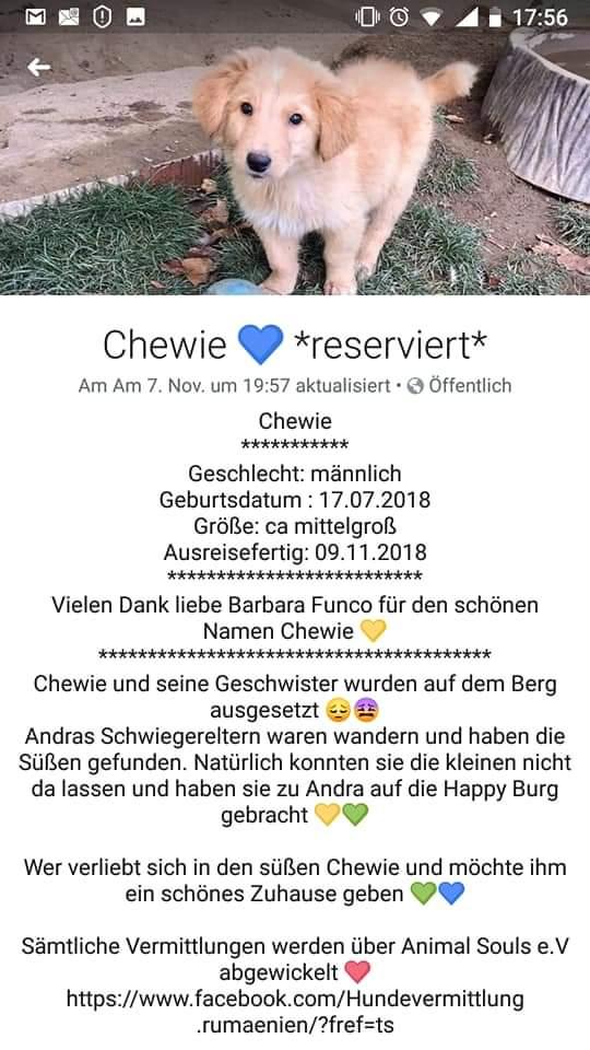Tierschutzwelpe bei mir in Pflege/Kreis Wesel. Ganz süße Fellnase. Bei Interesse gerne melden. #followerpowerpic.twitter.com/H9t46M3RcE