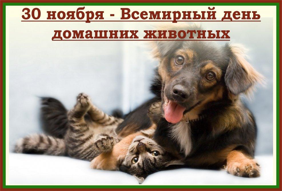 крайней мере, открытки день домашних животных 30 ноября заклад