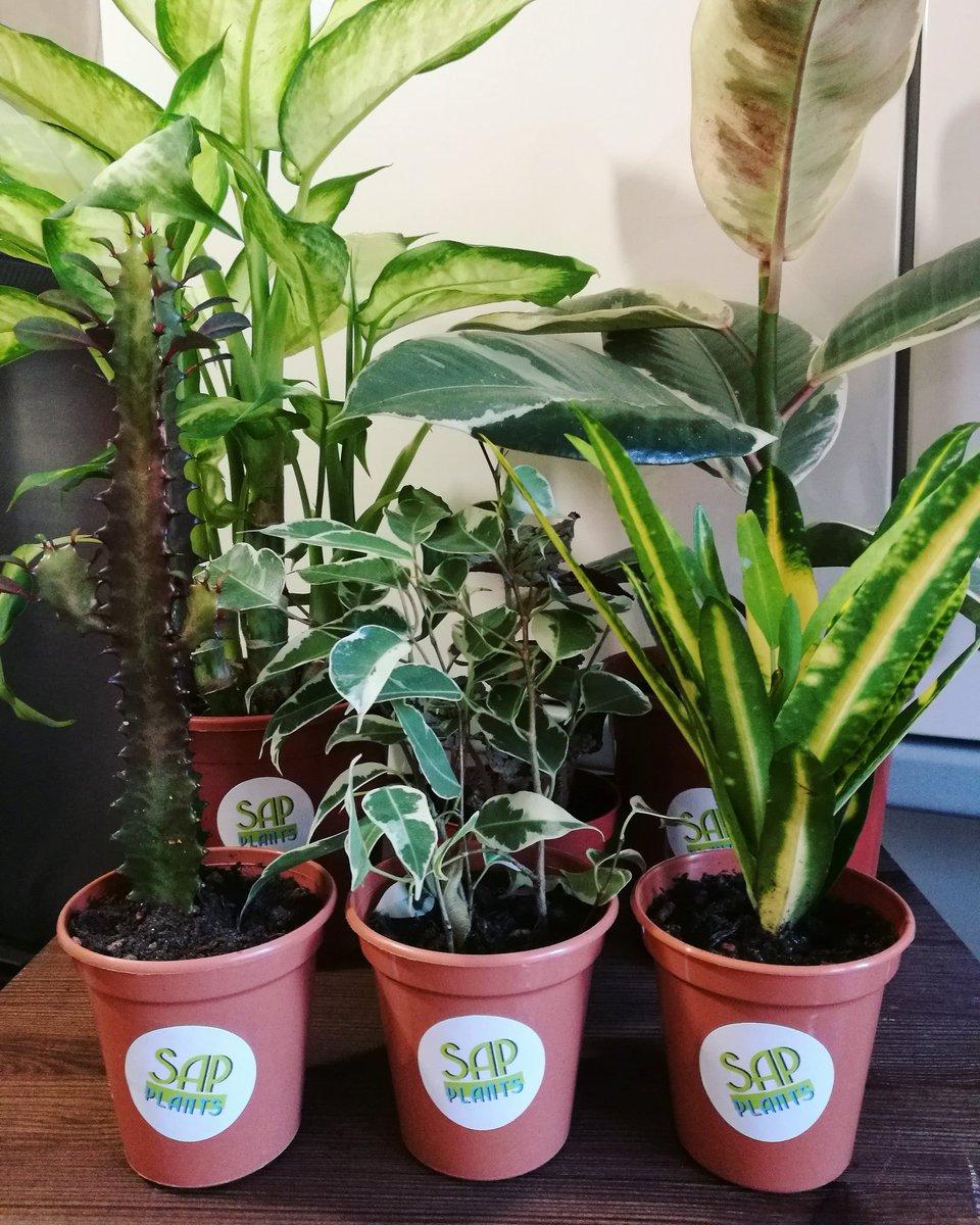 Sap Plants On Twitter Come Down To Cqnottm S Christmas Market