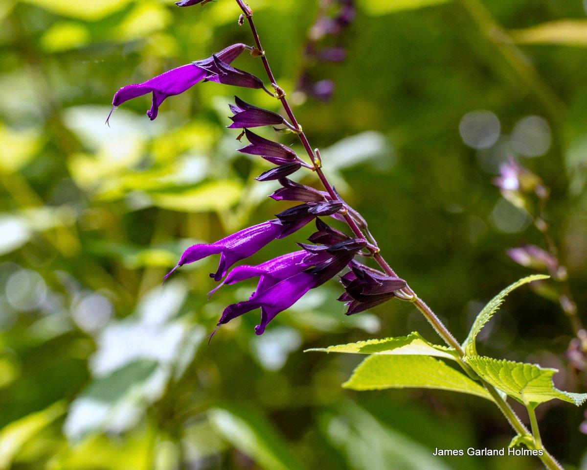 Harris County Master Gardeners On Twitter A Monarch Waystation