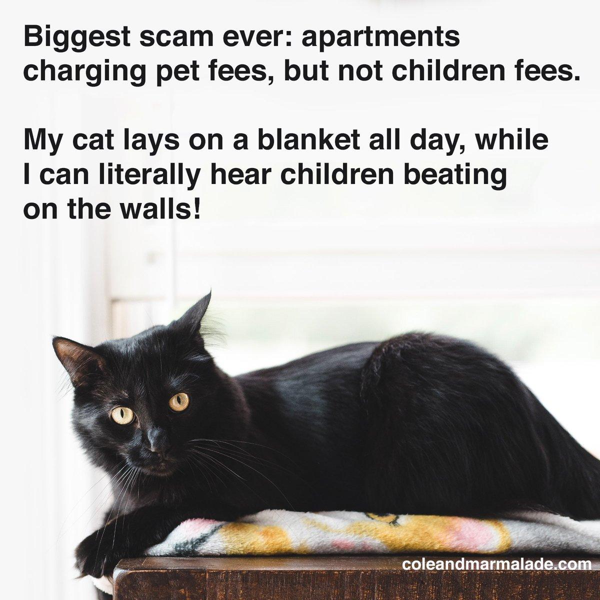 SO TRUE! 😠  #MyKidHasPaws #ColeAndMarmalade #CatsOfTwitter