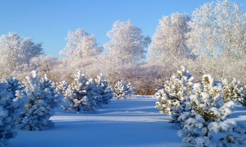 могут картинки на тему зима пришла работают археологи
