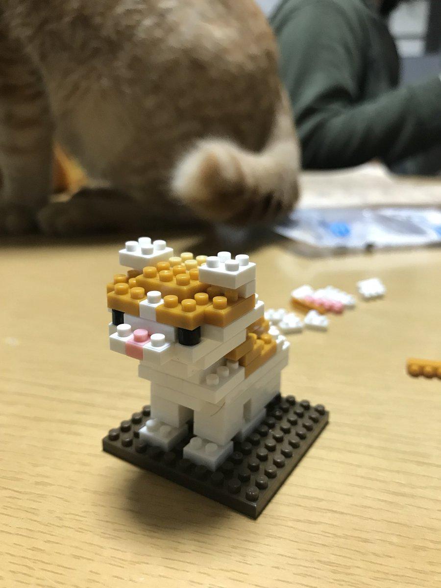 test ツイッターメディア - 細かい作業。 指先のリハビリ。  邪魔をするなっっ!。。。  なんとかできたっっ??  ダイソーさんもっと猫ブロックの種類増やしてください??  #ダイソー #プチブロック #寝子 #じろー https://t.co/KJ9FgN0Uug