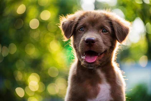 RT if you like puppies  Josh Lambo + #ProBowlVote  (Subtle, I know.)