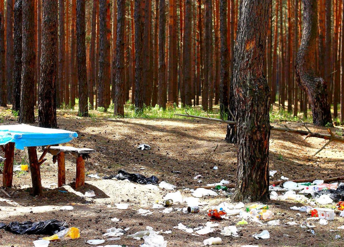 Картинки природы с мусором