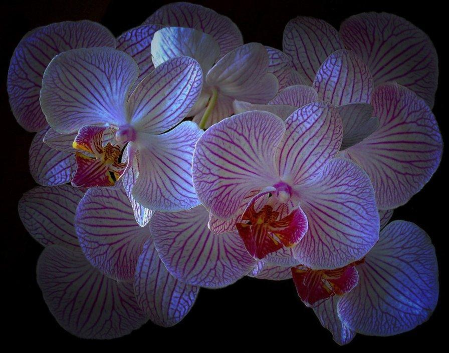 Картинки орхидей в анимации