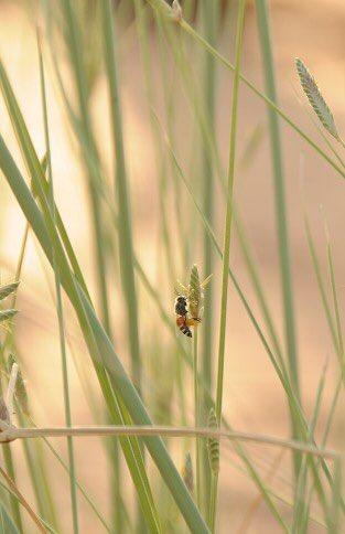 ここに住んで初めて、一見、花なんてどこにあるんだろうと思う砂漠にもミツバチが生活を営んでいること、自宅でハチミツ採れちゃうんだってことを知りました。そんなお話。