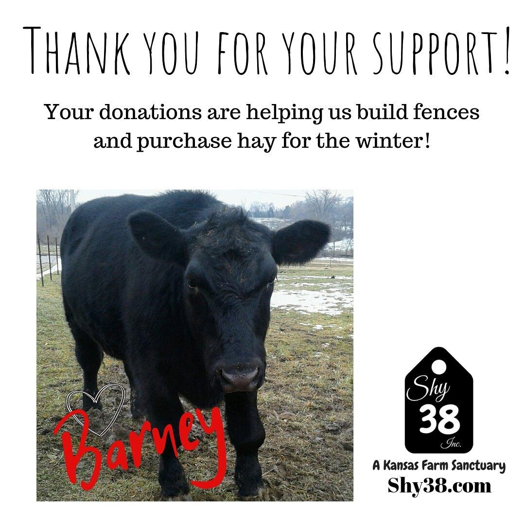 Shy38 Farm Sanctuary (@Shy38Inc) | Twitter