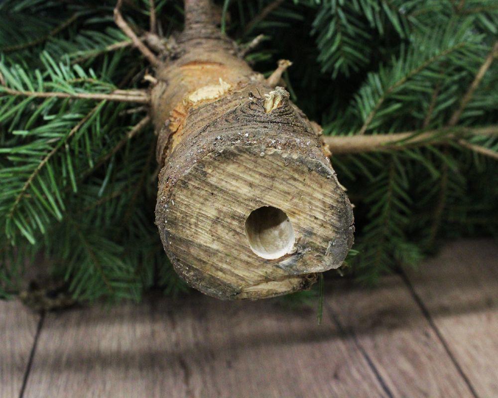 test Twitter Media - Heb je een afgezaagde kerstboom? Zorg dan dat je hond of kat niet uit het water kan drinken waar de boom in staat. Dit kan diarree, braken, maag-darmproblemen maar ook problemen met het zenuwstelsel veroorzaken. Meer tips: https://t.co/K5rNH8aAd1 https://t.co/FuFSekFjFL