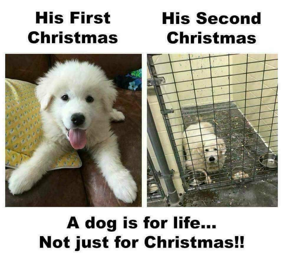Puppies are forever. Not just for Christmas. @Sia #AdoptDontShop