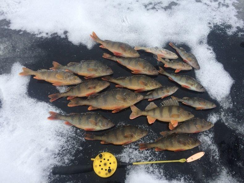 Рыбалка в карелии форум зимой