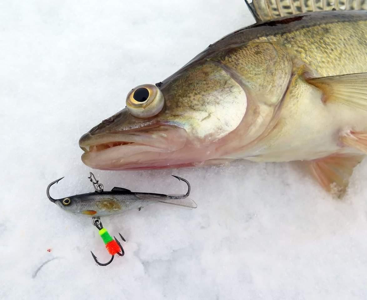 Подледная рыбалка на балансир