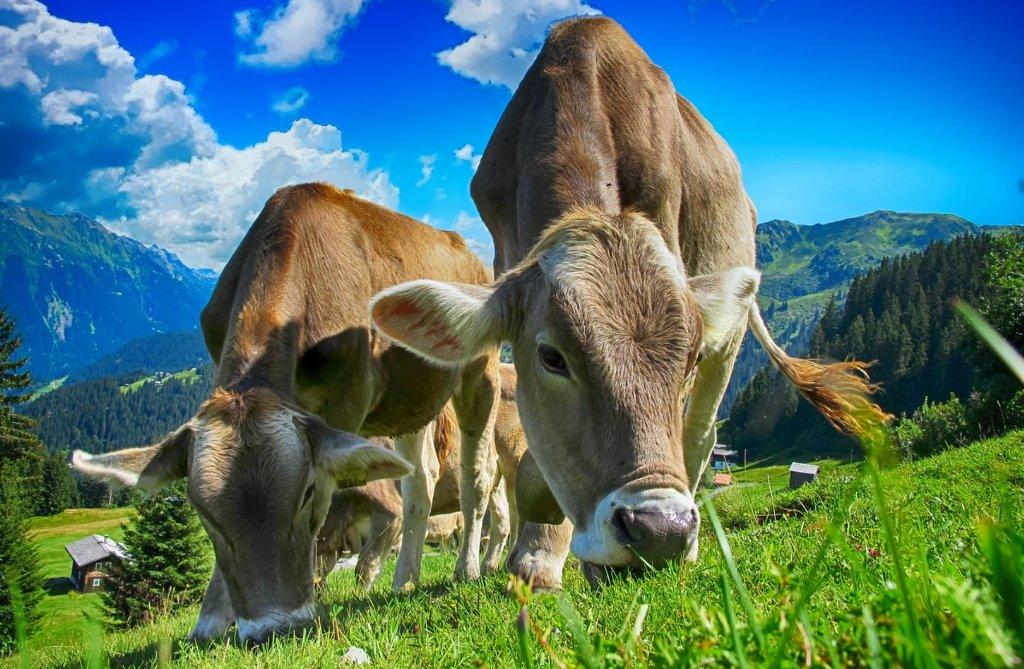 L'#alimentation éthique : plus de 40% des consommateurs français expriment un besoin de #transparence et de #traçabilité sur les conditions de production des aliments et d'élevage. Comment l'assurer ? Réponse dans @LesClesDeDemain