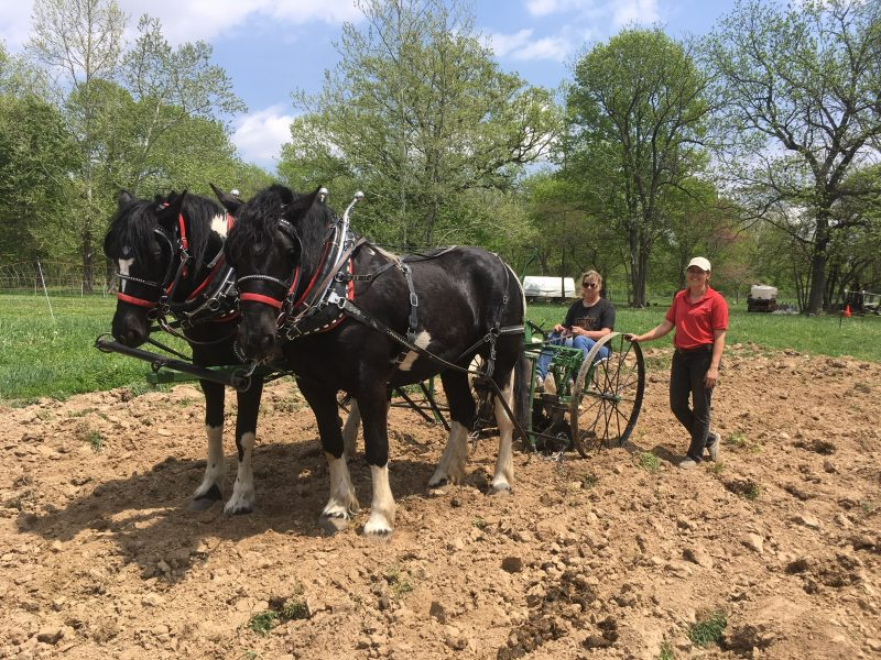 Drafthorses are used on this #Illinois #WWOOF host farm to