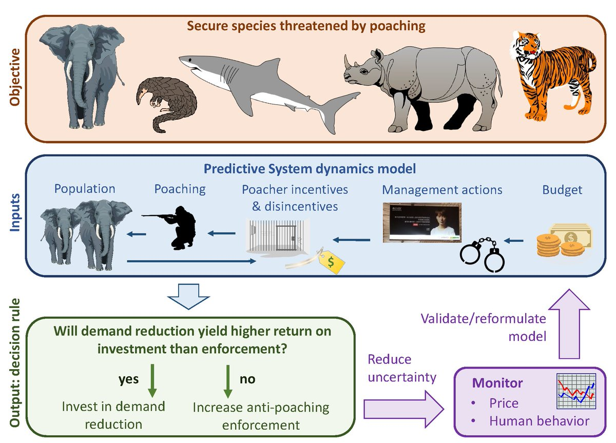 Demand reduction campaigns are promising anti-poaching interventions. Our new paper in @consletters shows that if campaigns cause even small reductions in price, they can be good investments compared to increasing anti-poaching patrols. #endwildlifecrime  https:// onlinelibrary.wiley.com/doi/full/10.11 11/conl.12618 &nbsp; … <br>http://pic.twitter.com/loOvBDKva9