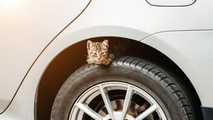❄️ Con este frío muchos #gatos 🐈 que viven en la calle se refugian en el motor de los 🚘 coches para recibir calor. Un golpe en el capó puede salvar su vida. #FelizMartes Foto