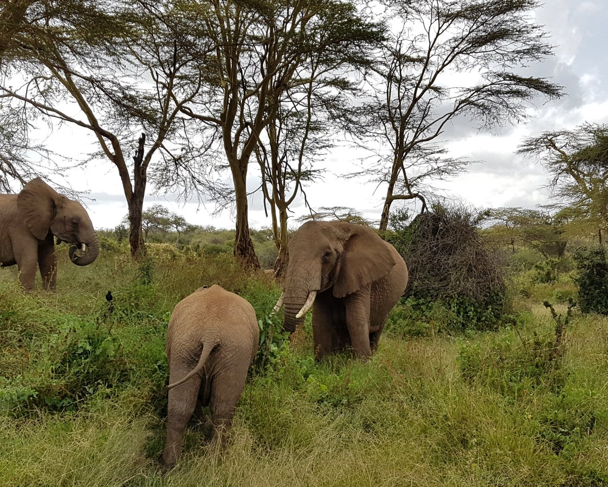 What impacts do invasive species have on African Wild Mammals? To go to Kenya and find out, apply for this PhD project with me, @MJWhittingham1 @PS_Applied_Ecol and Russ Hill @DurBiol @CEGDurham! tinyurl.com/yaa7clal Pls RT
