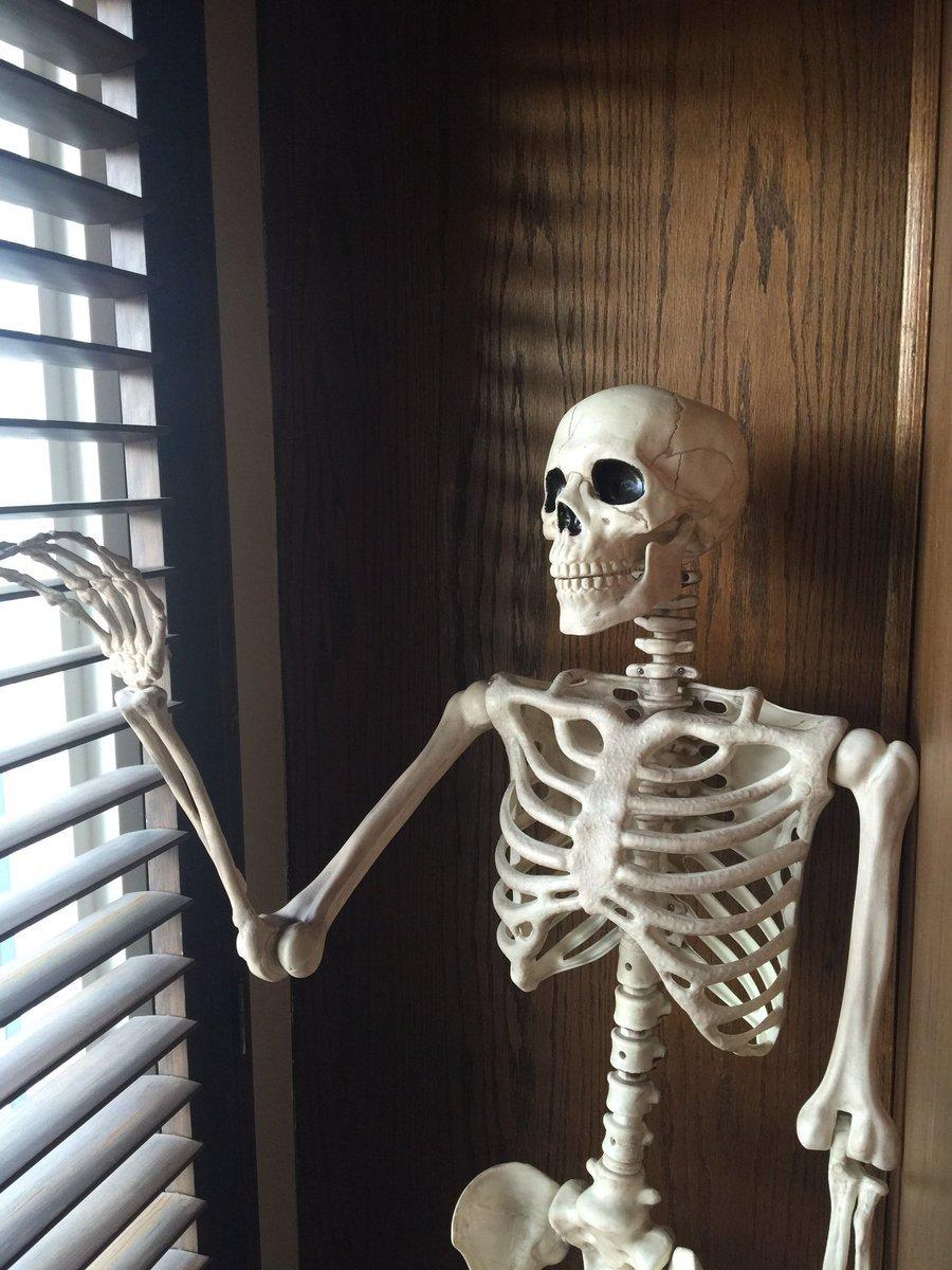 Смешные картинки с скелетом