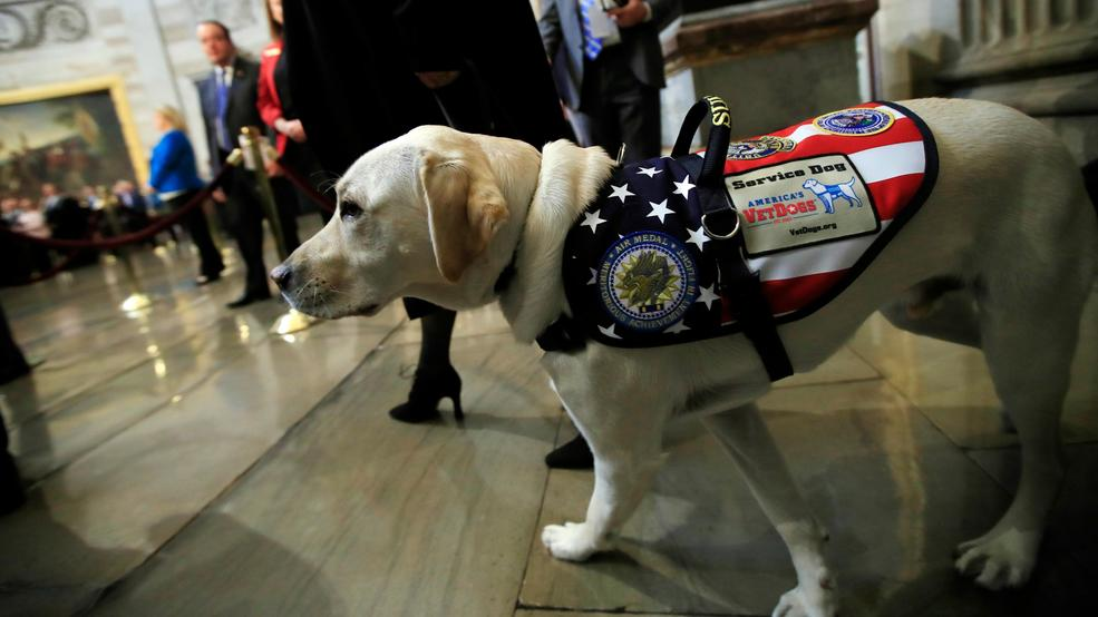 Bush saluted by CIA comrades; service dog Sully comes, too https://t.co/2G7suOb24a #Remember41