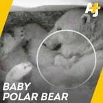 #Bears Twitter Photo
