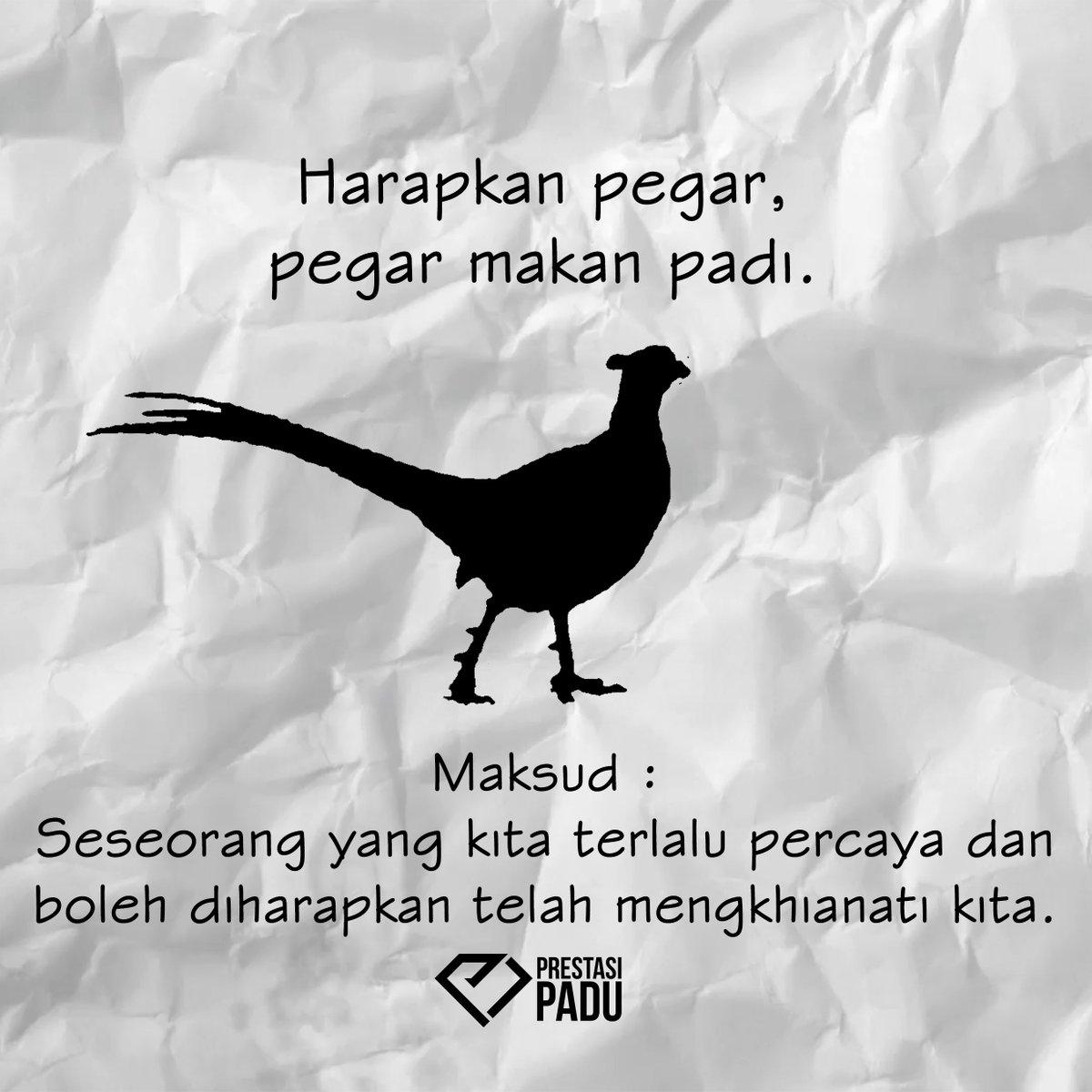 Pusat Tuisyen Prestasi Padu On Twitter Harapkan Pegar Pegar Makan Padi Pegar Ialah Sejenis Ayam Yang Digunakan Untuk Menghapuskan Serangga Yang Merosakkan Padi Pegar Bukan Pagar Peribahasa Peribahasaoftheday Bahasa Melayu Tuisyen