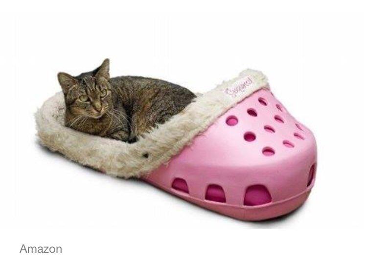 If @johnbcrist had a cat! 🤣🤣