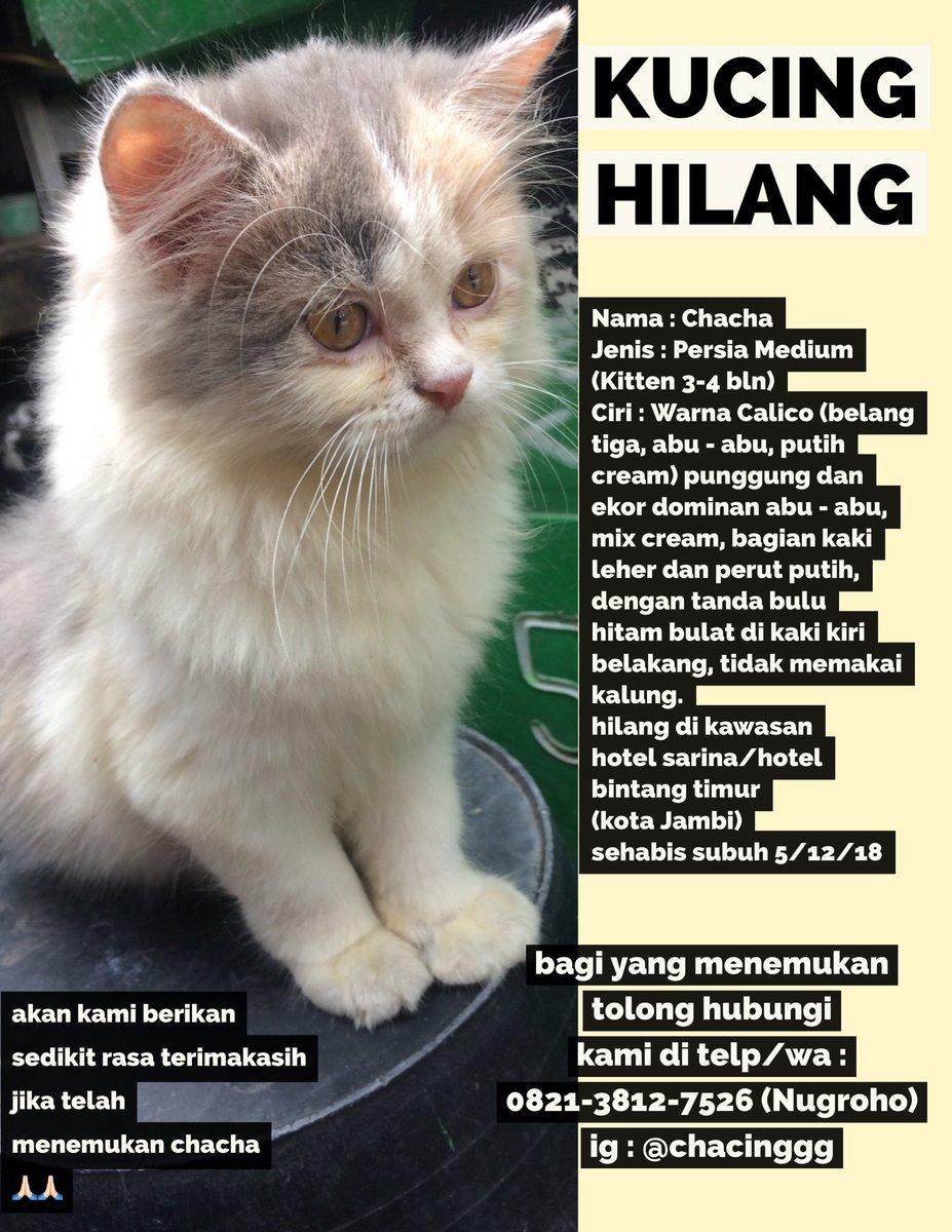 Laki Laki Nama Lucu Kucing Persia Kucingcomel Com