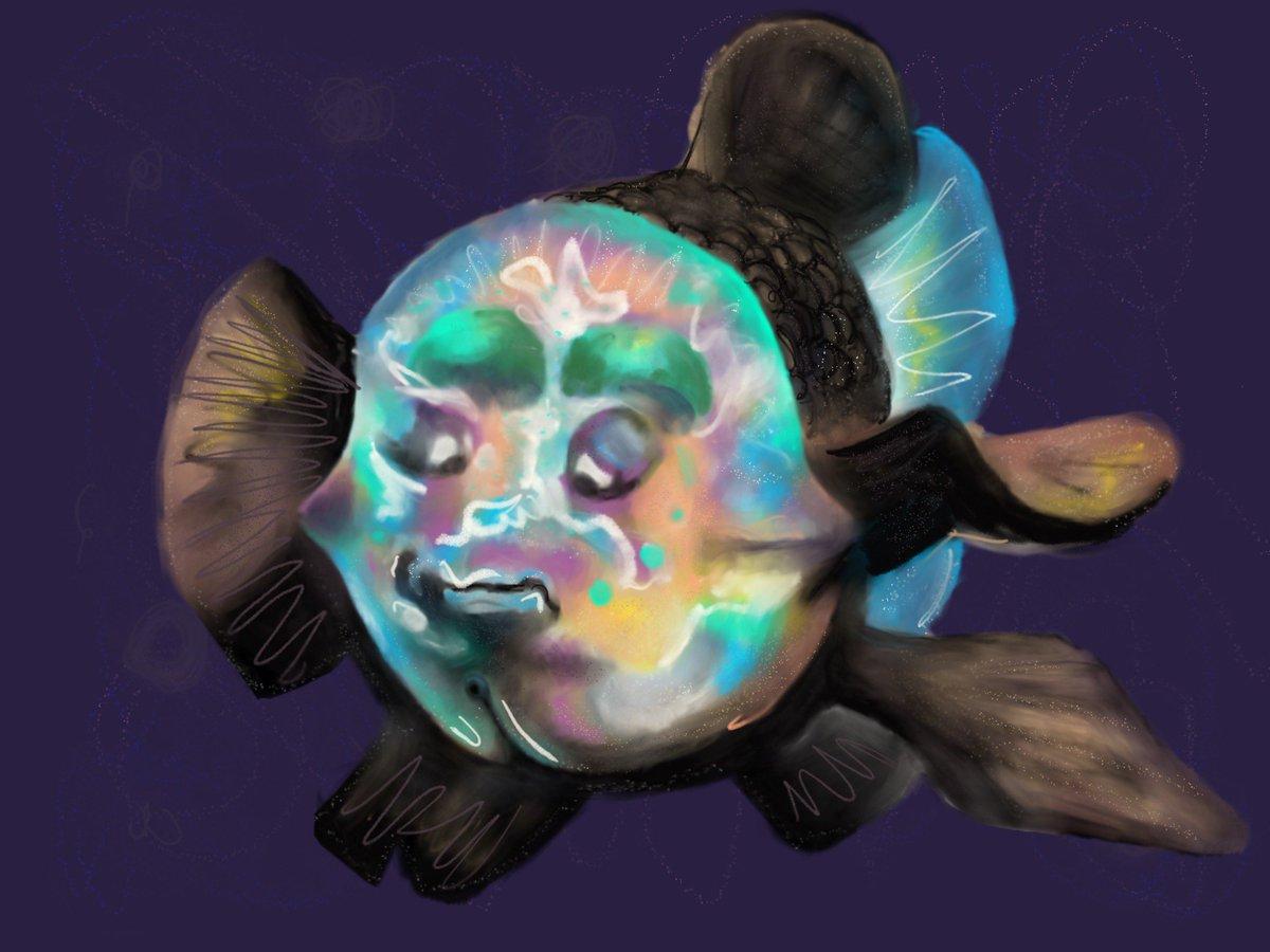 сюжетов фото рыбы с прозрачной головой можно