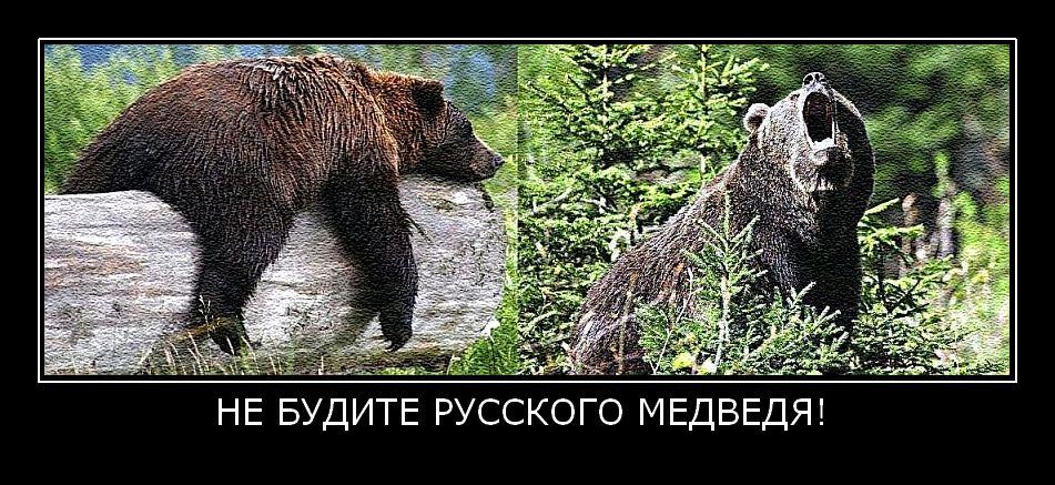 здоровым, будь не зли медведя картинка этот фотопроект носил