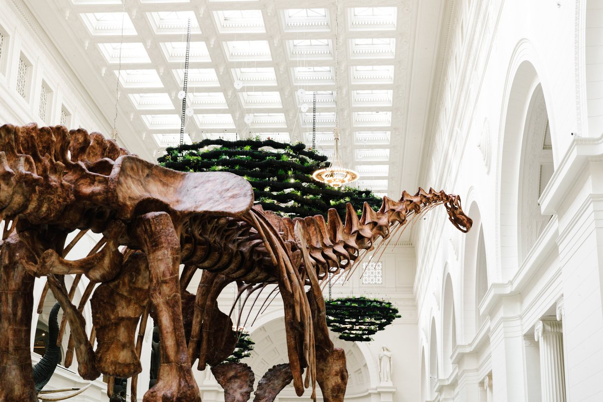 @nathanchen_us @fly2ohare Not to be confused with thicc boi, Máximo, whos 122 feet long. 🦕