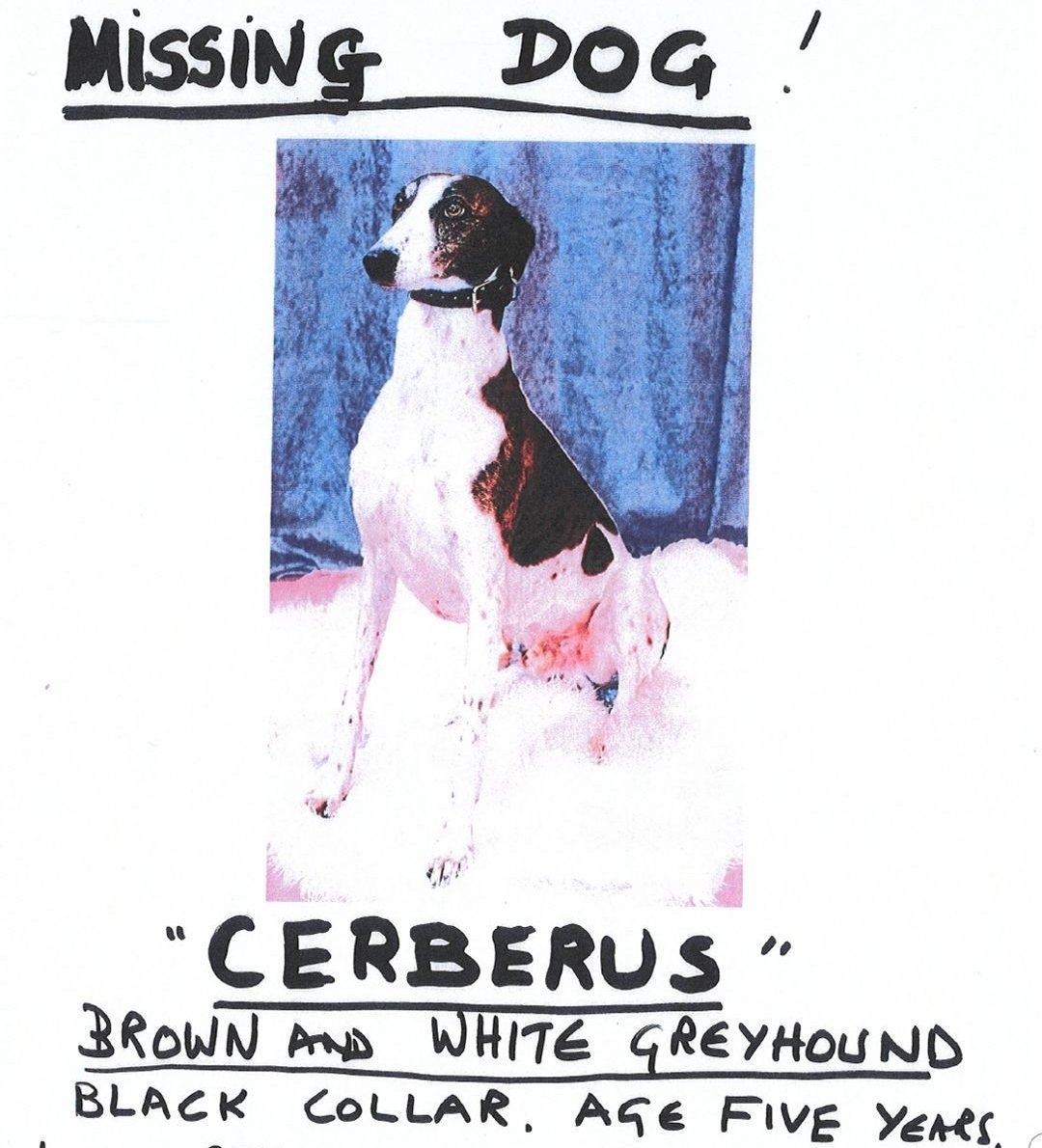 MISSING DOG. If you see this dog, let us know. Asking for a mate. His Nanna is distraught!!!  <br>http://pic.twitter.com/kxxpjpg346