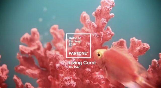 RT @AnnieTulip: Pantone anuncia el color para el 2019. Living Coral será tendencia desde hoy. https://t.co/UcHBtLZt2H
